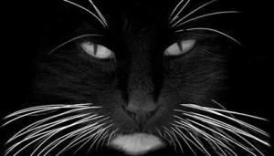 gato com bigodes